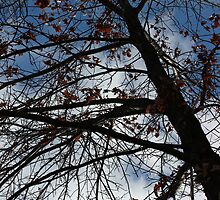 Waiting for Spring 11 by marybedy