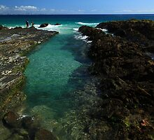 Rock Pool Snapper Rocks by Noel Elliot