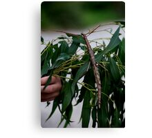 Monster Stick Insect Canvas Print