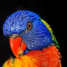The Rainbow Lorikeet by Cordell Richardson