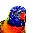 Rainbow Lorikeet (on white) by Cordell Richardson