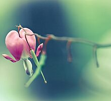 Pink Bleeding Heart by Rebecca Caspers