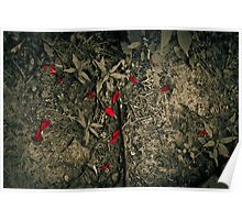 Red Petals from Above Poster