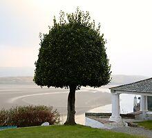 Portmeirion, Gwynedd, North Wales by Louise Green