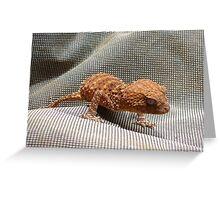 Knob-tailed Gecko Greeting Card