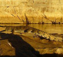 Shadowy Threat, Geikie Gorge by overtherange