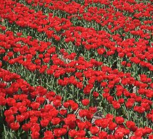 Red Tulips by Jan Zoetekouw