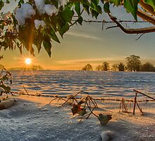 Sunrise through the Branches by AJC Photography
