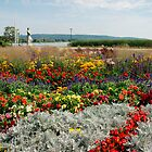 Flower Display, Keszthely by jojobob