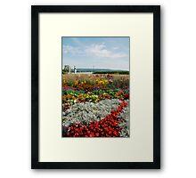 Flower Display, Keszthely Framed Print