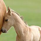 Horse and colt Saskatchewan Canada by pictureguy