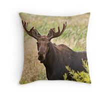 Bull Moose in Saskatchewan Prairie wheat bush close up Throw Pillow
