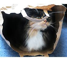 Whisker Purrfection Photographic Print