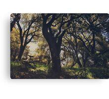 Wildly and Desperately My Arms Reached Out to You Canvas Print