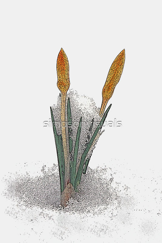 Crocus in the Snow by simpsonvisuals
