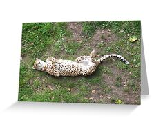 Playing Dead Greeting Card
