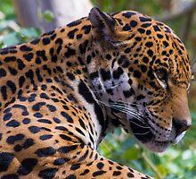 Jaguar by BGSPhoto