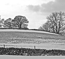 Winter trees, Yorkshire Dales by Rebecca Mason
