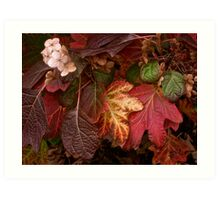 Autumn Echoes Art Print