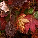 Autumn Echoes by Mary Fox