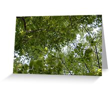 Summer Leaves Greeting Card