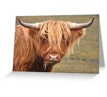 Coo Greeting Card