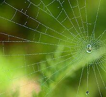 Dew Drops by Susan R. Wacker