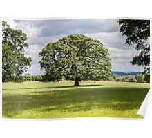 Oak Tree in the grounds of Raby Castle Poster