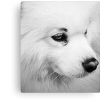 White Dog  Canvas Print