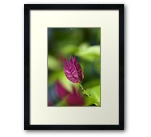 Bougainvillea over Tie Dyed Nature Framed Print