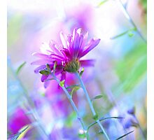 Spring is in the air.. Photographic Print