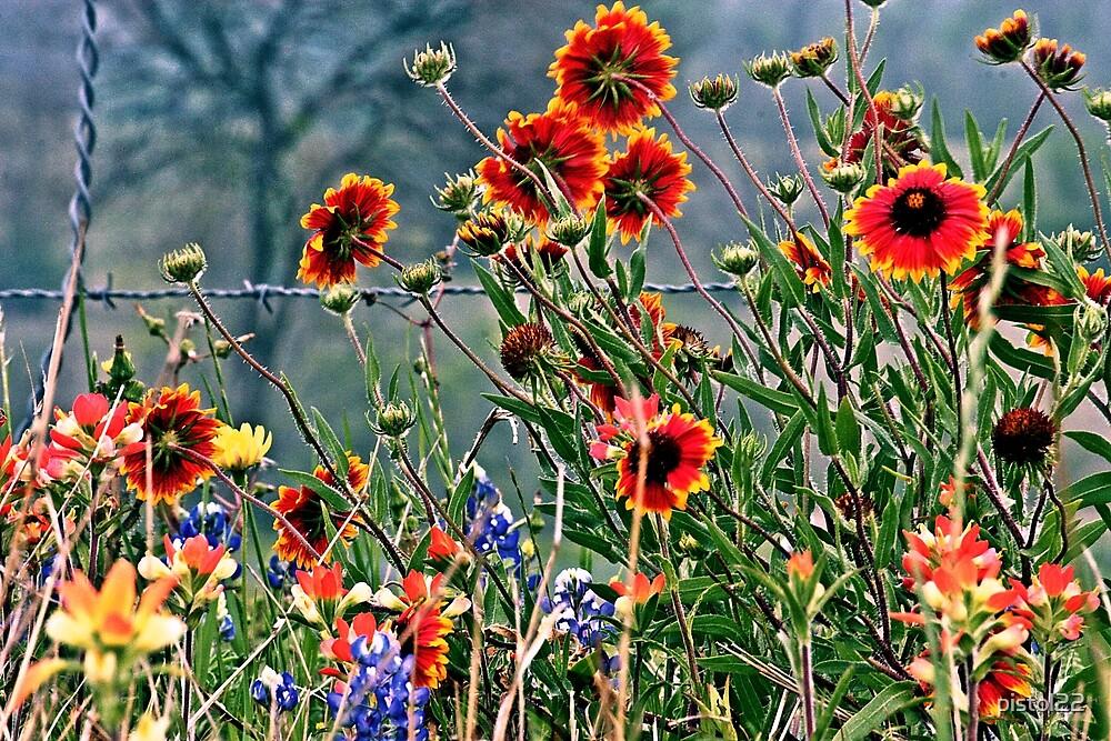 carpet of wildflowers by pistol22