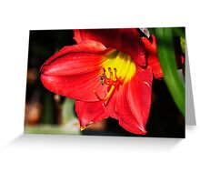 PS3-6-61470 Greeting Card
