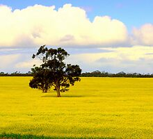 Of Golden Fields by bekyimage