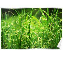 Tall Tiger Grass Poster