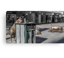 Rundle Mall - Rundle Mall Pigs   Canvas Print