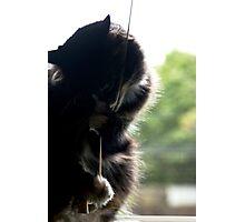 Window Cat Photographic Print