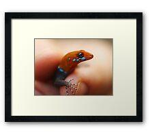 Yellow-Headed Gecko, Gonatodes albogularis Framed Print