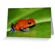 Blue Jeans Poison Dart Frog, Oophaga pumilio Greeting Card