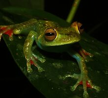 Costa Rican Herps by Seth LaGrange