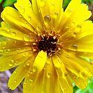 yellow rain by Jan Stead JEMproductions