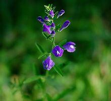Purple Wildflower by Arteffecting