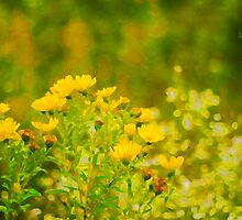 Golden Yellow Daisies by Arteffecting