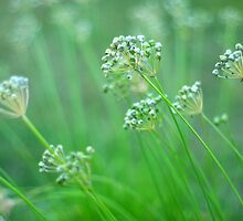 Fresh Chives In The Garden by Arteffecting