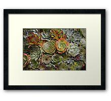 Cactus Charm Framed Print