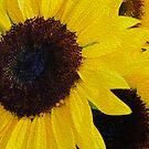 Sun Flowers by Kathryn Potempski