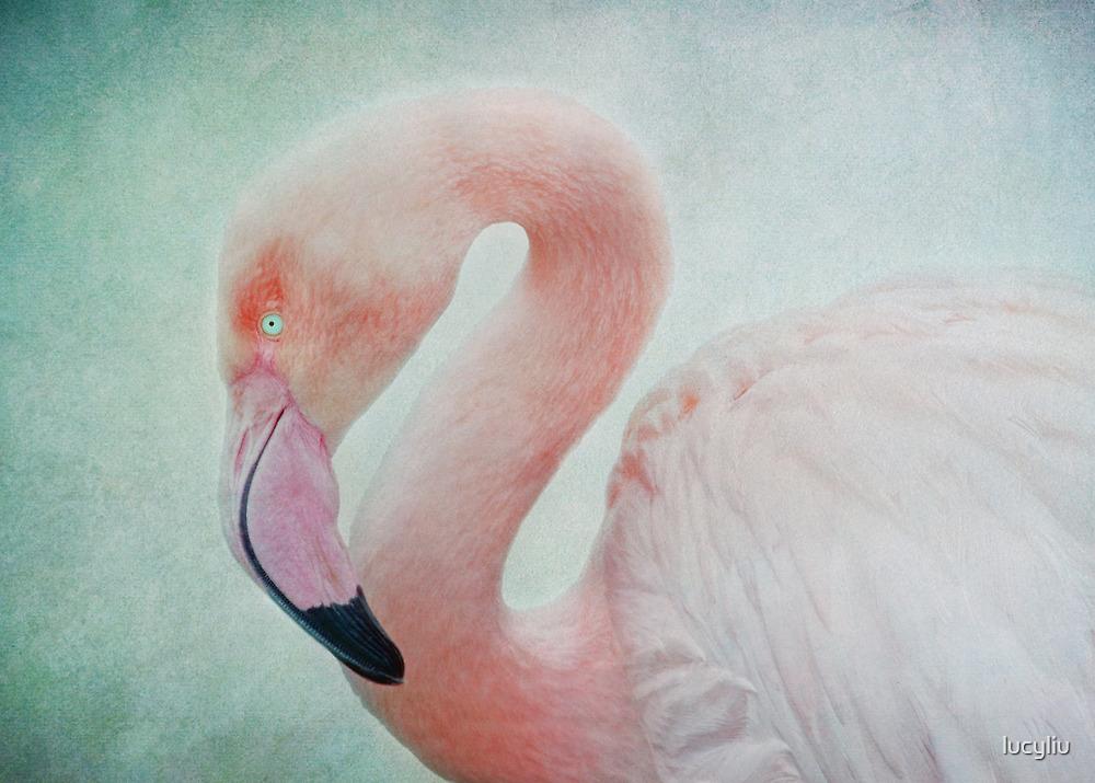 flamingo by lucyliu