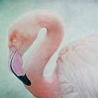 flamingo by lucyliu