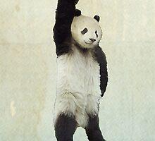 Pandachute by Vin  Zzep