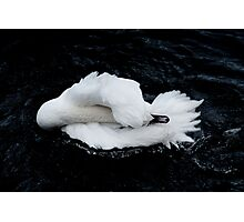 Dying Swan Photographic Print